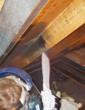 mold_removal_and_remediation_2
